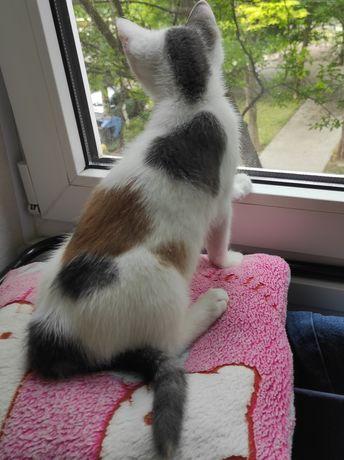 Милый котёнок- девочка