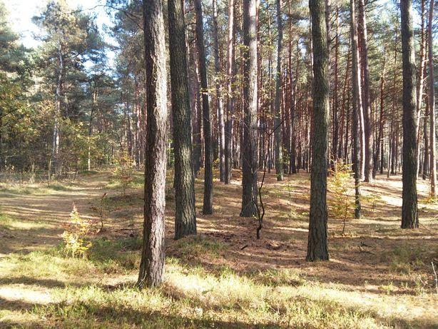 Działka rekreacyjna Rakszawa 1,22 ha