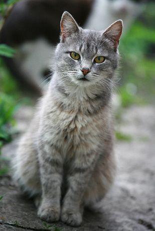 кот бесплатно в добрые руки