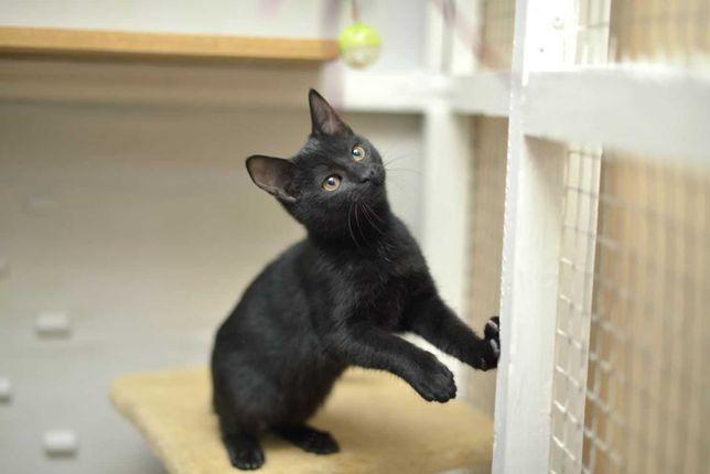 отдам котенка, черная девочка, 3 месяца