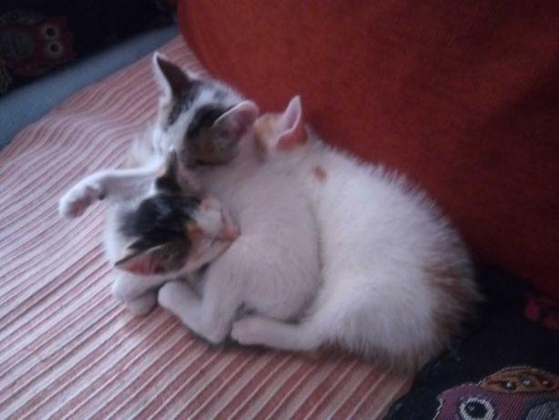 Duas gatas para adoção