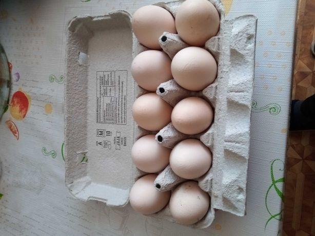Jajka wiejskie z gospodarstwa.