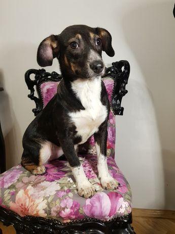 Дейзі шукає сім'ю, собака, щенок