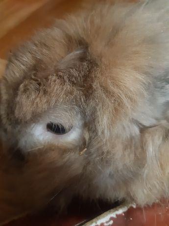 Отдам в хорошие руки кролика