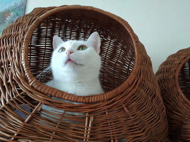Milutka kotka gotowa do adopcji