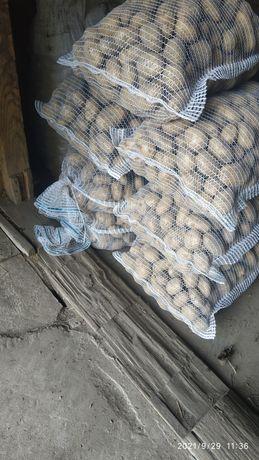 Ziemniaki Sadzeniaki Catania