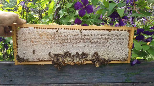 Мёд подсолнух+ разнотравье 2021 года