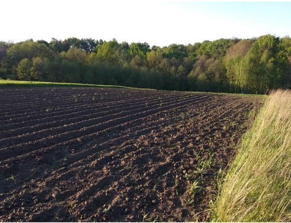 Земельна ділянка сільськогосподарського призначення