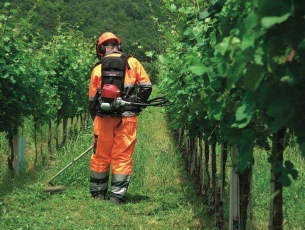 Usługi koszenia trawy, wycinka krzewów, drzew, samosiejek.