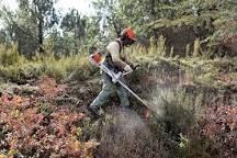 Limpeza de terrenos ,corte de matos