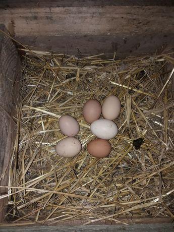 Jajka wiejskie swojskie 0.90 gr