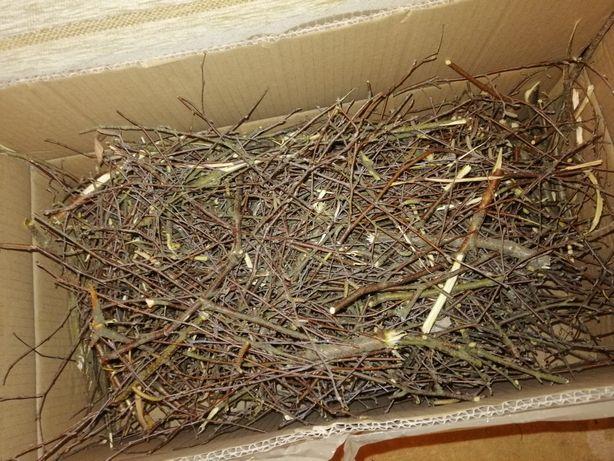 Świeże gałązki brzozowe do budowy gniazd lęgowych dla Papug!!