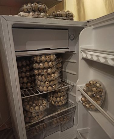 Яйца домашние перепелиные