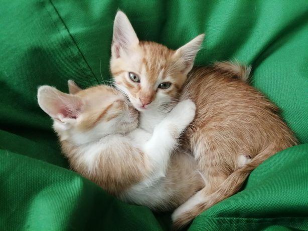 Отдам домашних котят в добрые руки.