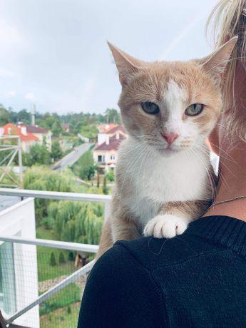 Солнечный котик Ям-ямчик, 1годик)
