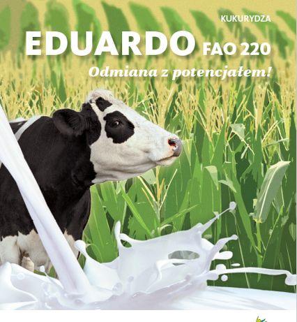 Kukurydza EDUARDO 220 FAO Saatbau 80tyś. OPTIPLUS Cena Brutto