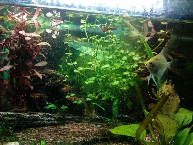 Vendo plantas para aquário