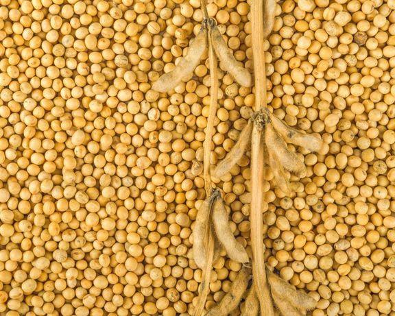 Приймаємо сою пшиницю кукурудзу гречку