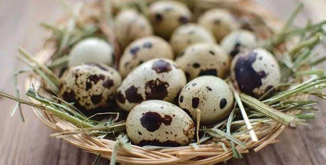 Яйця перепелині. Контейнер. ОПТ