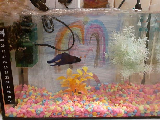 Akwarium z rybką i akcesoriami
