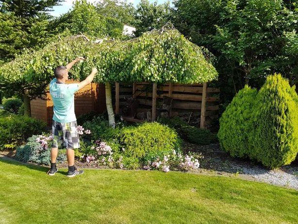 Zakładanie ogrodów,SERWIS,nawadnianie,przycinanie wycinanie,projekty