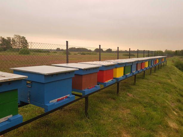 Odkłady pszczele odłakd ramka dadant krainka
