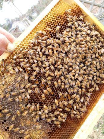Odkłady pszczele Włoszka Ramka Wielkopolska