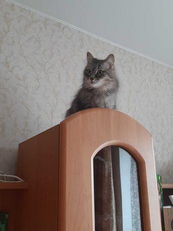 Кошка в поисках семьи