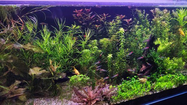Zestaw roślin akwariowych okazja