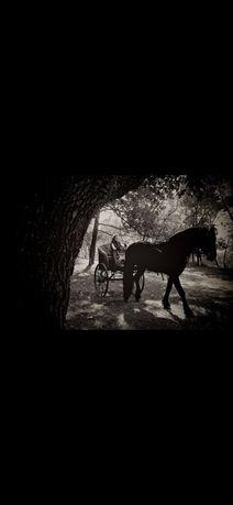 Продаю карету, упряжь, двуколку для лошади!