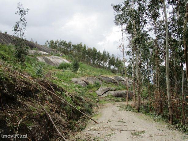 Terreno  Venda em Guilhofrei,Vieira do Minho