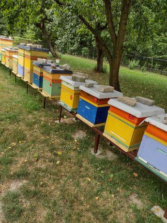 Sprzedam ule z pszczołami,