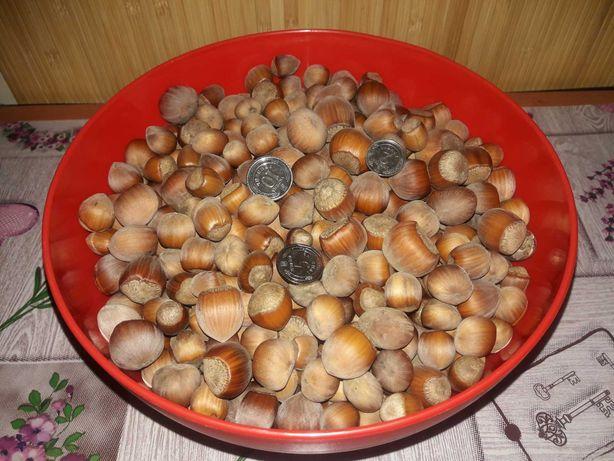 Продам самый вкусный фундук, орех, лісовий горіх, ліщина!