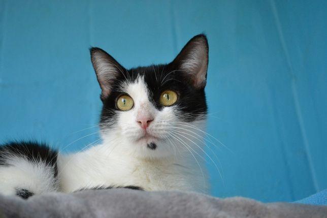 кішечка чорно-біла красуня з мушкою на підборідді 1р