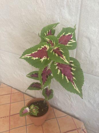 Plantas disponiveis para venda