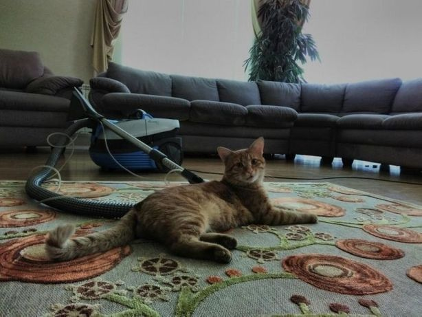 Химчистка дивана от 400, диванов, матраса, матрасов,ковролина!