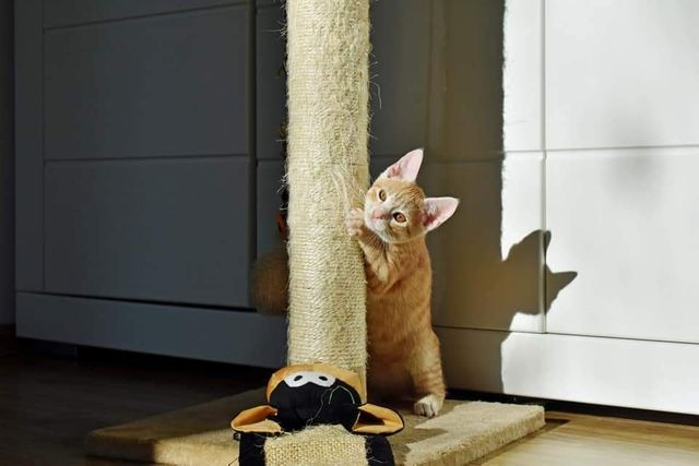 Ron, kociak szuka domu