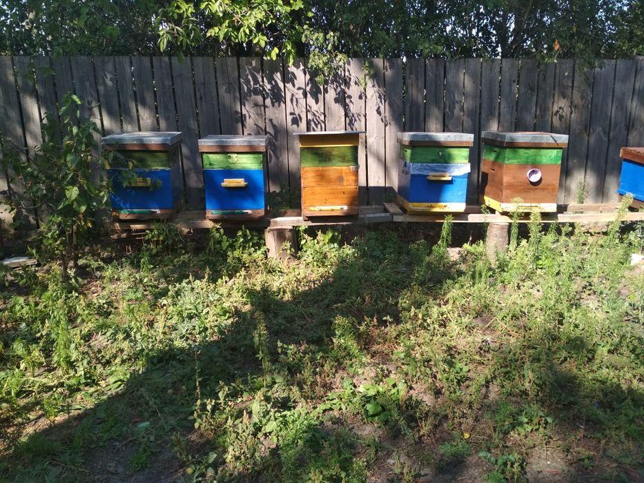 Пчелы , семьи, пчелосемьи Чернигов - изображение 1