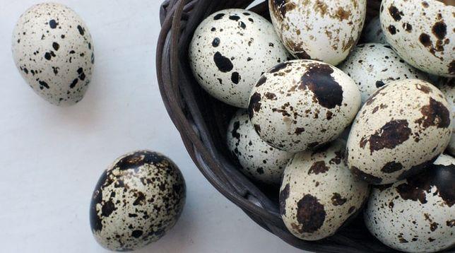 Перепелині яйця