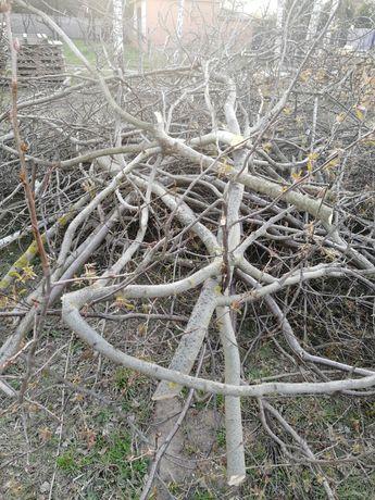 Oddam gałęzie za darmo