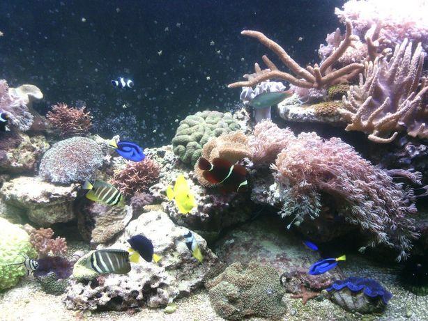 обслуживание и консультации по аквариумам
