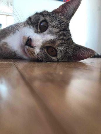 ZAGINĄŁ szarobury kot