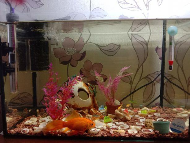 Продам аквариум и всё, что там есть!