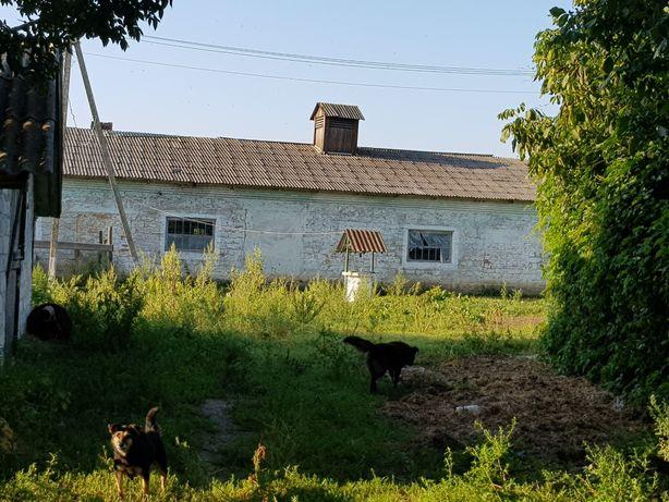 Продажа свинарник, конюшня ферма помещения хоз. назначения