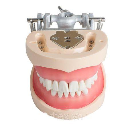 Фантом модель со сьемными зубами стоматология