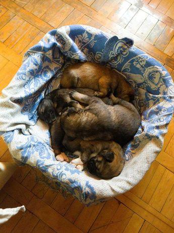 4 замечательных щенка ищут любящих хозяев