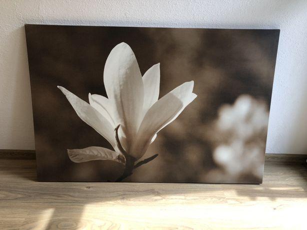 Obraz 120x80 kwiat
