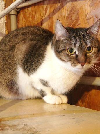 Крупная кошка можно в частный дом