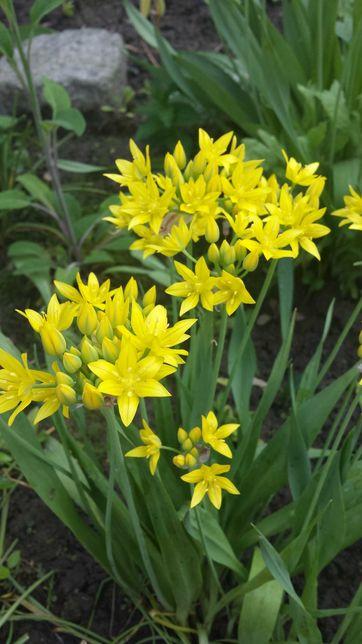Kwiaty wieloletnie, byliny