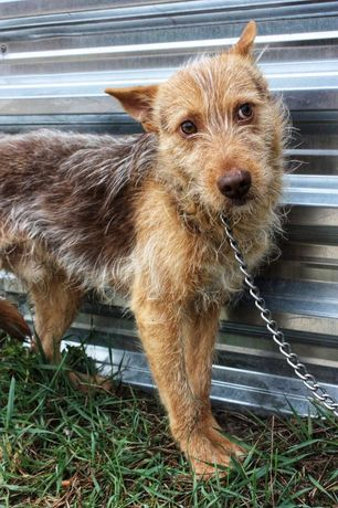 Классный пёс Фредди, 9 месяцев собака собачка